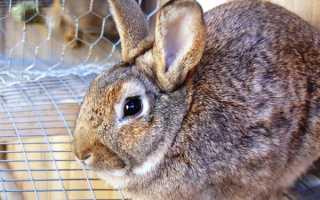 Понос у кроликов причины чем лечить