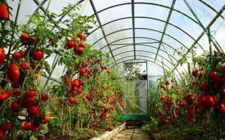 Высокорослые помидоры описание и правила выращивания высокоурожайных сортов для теплиц или открытого грунта