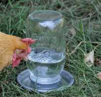 Поилки для кур как сделать своими руками ниппельные автоматические вакуумные из бутылки инструкции размеры и высота