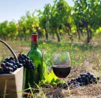Виноград сорта Каберне Кортис — классика ранней спелости — Сорта винограда, Винные