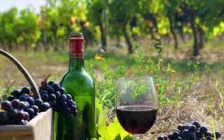Описание технических сортов винограда Изабелла Каберне
