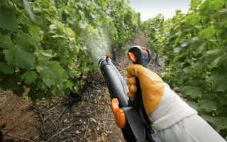 Опрыскивание винограда весной — обработка медным купоросом