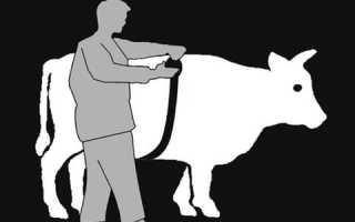 Как узнать вес быка без весов — таблица измерения КРС и другие методы