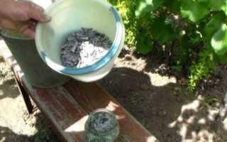 Подкормка винограда в Беларуси. Как рассчитать потребность винограда в удобрениях