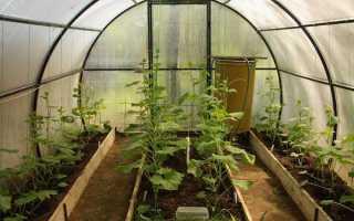 Как посадить огурцы в теплице правильно схема посадки