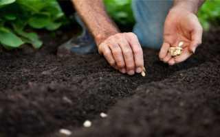 Как сажать тыкву в открытый грунт схема посадки как правильно