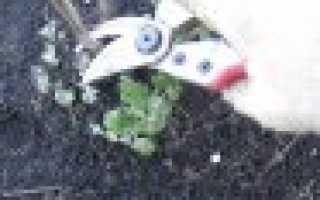 Надо ли обрезать хризантемы на зиму — Сад и огород