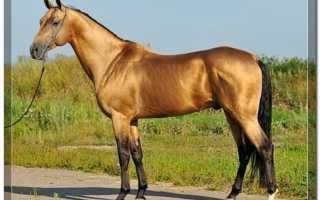 Буланая масть лошадей описание фото