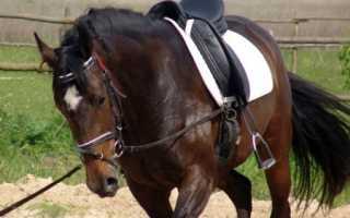 Как сделать седло для лошади своими руками