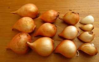 Удобрение при посадке луковиц тюльпанов осенью