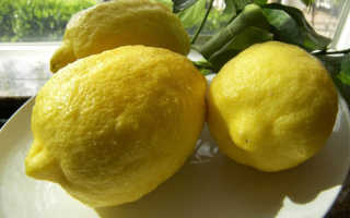 Лимон Пандероза описание сорта уход в домашних условиях