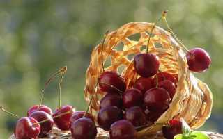 Черешня в Подмосковье лучшие сорта: самоплодные низкорослые, самоопыляемые, сладкие, в средней полосе России, выращивание и уход