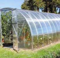 Посадка помидор в теплице из поликарбоната: когда и как правильно высаживать?