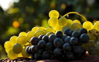 Сколько сахара в винограде кислотность и сахаристость