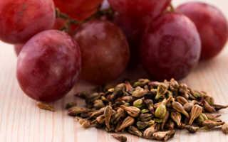 Косточки винограда вред и польза, противопоказания и применение
