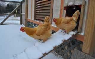 Утепление курятника на зиму своими руками пенопласт теплая подстилка