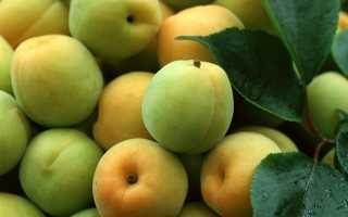 Дозревают ли сорванные персики дома хранение что сделать