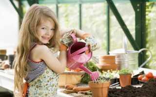 Сорта и виды хризантем: значение цветка, описание, фото. Хризантема в горшке комнатная и садовая многолетняя: посадка и уход в домашних условиях