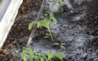 Зола для помидоров полезные свойства для томатов рекомендации по внесению