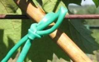 Как правильно подвязать виноград весной схема подвязки