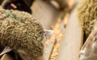 Кормушки для овец своими руками: как сделать