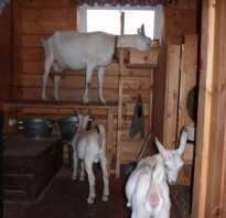 Как построить сарай для коз своими руками